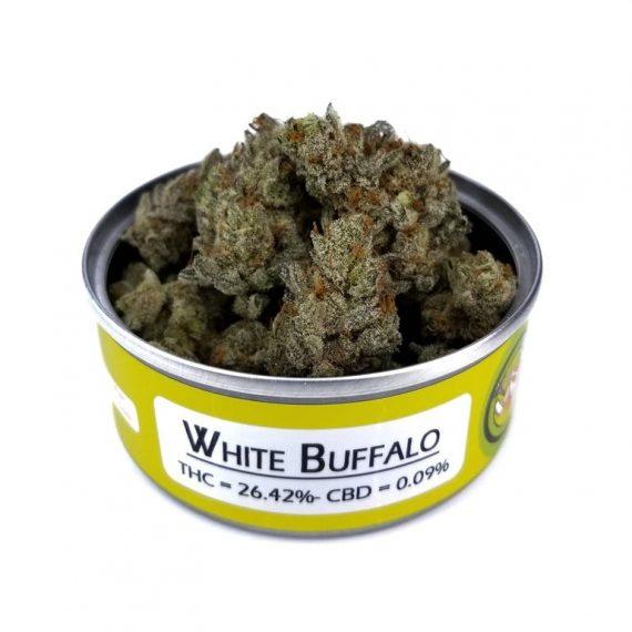 White_Buffalo1
